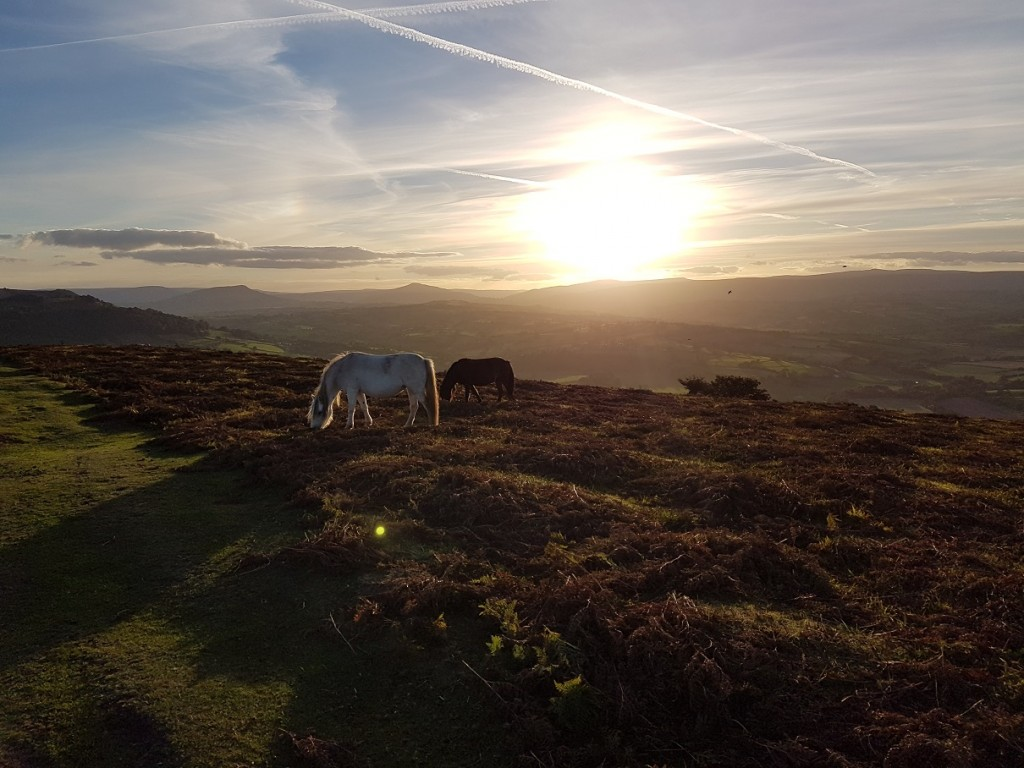 Horses & Golden Orb Garway Hill UK pic